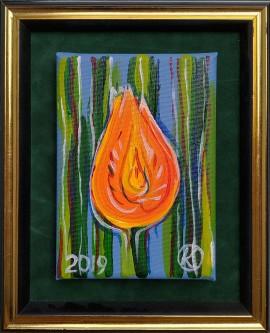 Tulipan(8)
